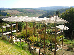 Middle Earth Organic Nursery